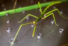 Closeup Shot Of A Green Walkin...
