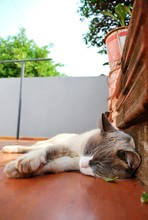 Close-Up Of Cat Relaxing Outdo...
