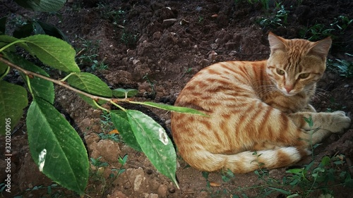 Fotografie, Obraz Ginger Cat Sitting By Plant