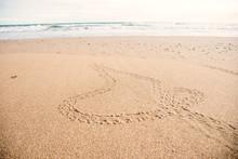 Baby Turtles Footprint On The ...