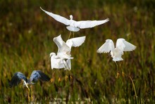 This Image Shows A Flock Of Wi...