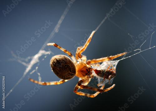 CLOSE-UP OF SPIDER ON WEB Tapéta, Fotótapéta