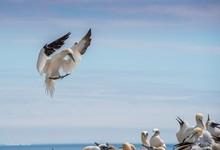 Birds Against Sky