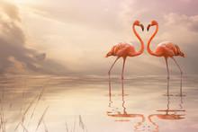 A Pair Of Pink Flamingos Makin...
