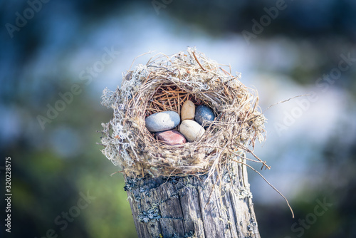 Abandoned nest made by birds from grass, branches and pine needles with small pebbles inside on snag in the forest Tapéta, Fotótapéta