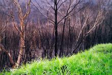 Australian Bushfires Aftermath...