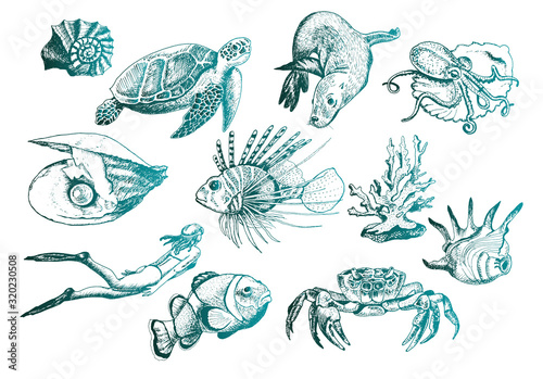 Leinwand Poster Ocean Life and Marine Creatures with Loggerhead Turtle and Shell Vector Set