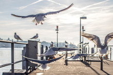 Seagulls Flying At Harbor Against Sky