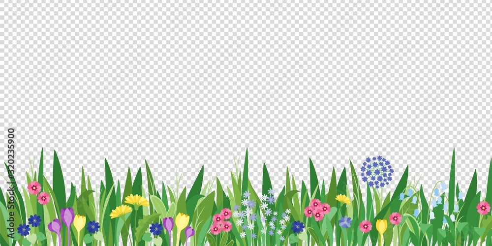 Fototapeta Spring garden grass and flowers border. Cartoon vector flower background. Green elements objects flora on transparent background