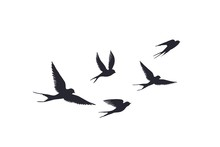 Flying Birds Silhouette On Whi...