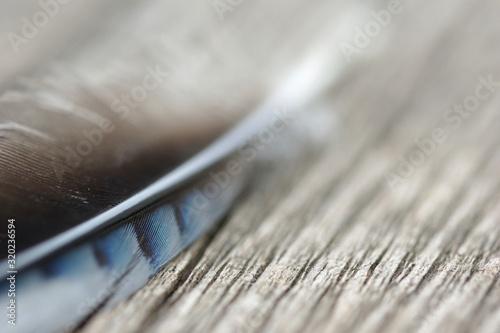 Obraz na plátně Close-Up Of Jay Bird Feather