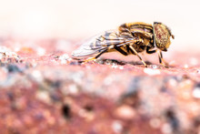 Close-up Of Hoverfly On Field