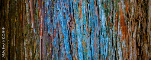 thuja tree bark in detail, texture in nature Canvas Print