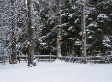Multiple Birdhouses With Snow