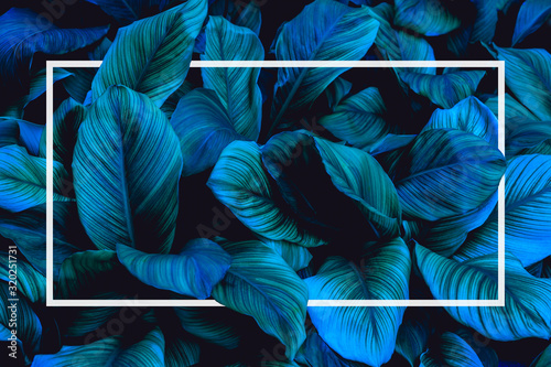 Fototapete - tropical leaves with white frame, abstract green leaves nature view of leaf in garden