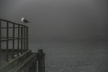 Seagull Perching On Railing Of Pier At Lake