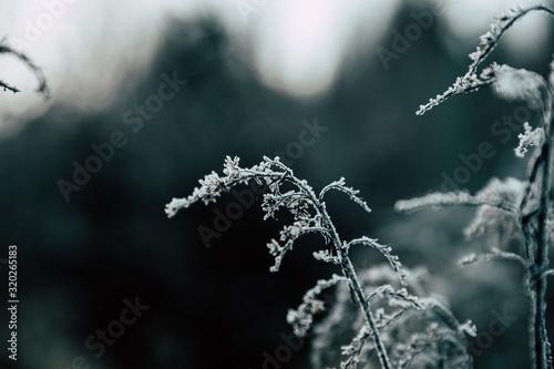 Photo grass