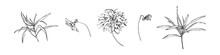 Set Of Hand Drawn Flowers With Dahlia. Stylized Sketch Decorative Botanical Vector Illustration. Black Isolated Image On White Background
