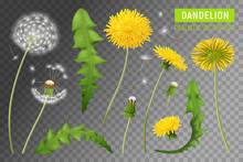Realistic Dandelions Transpare...