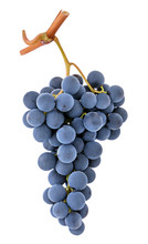 Blue Purple Dark Wine Grape Bunch Isolated On White Background As Detail For Packaging Design