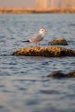 Beautiful Seagull Sitting On A...