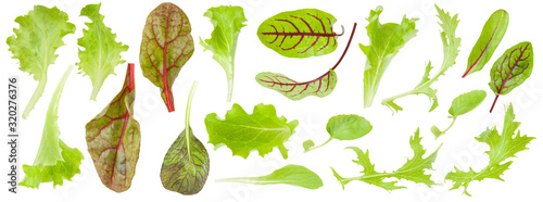 Obraz Set of fresh green lettuce leaves isolated on white background, detail for collage, close up - fototapety do salonu