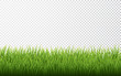 Green grass border set on transparent background. Vector Illustration