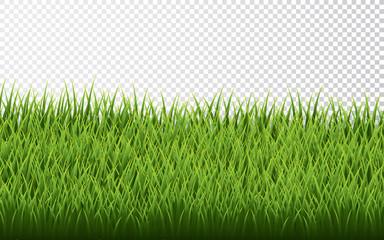 Green grass border set on transparent background. Vector Illustration