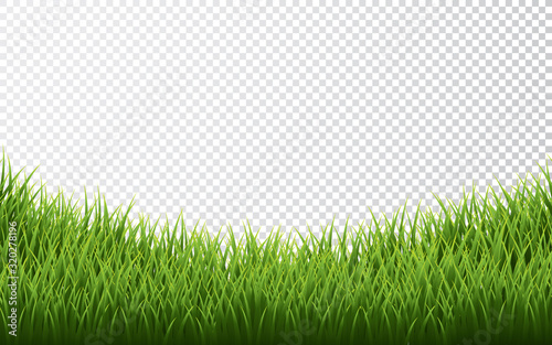Obraz Green grass border set on transparent background. Vector Illustration - fototapety do salonu