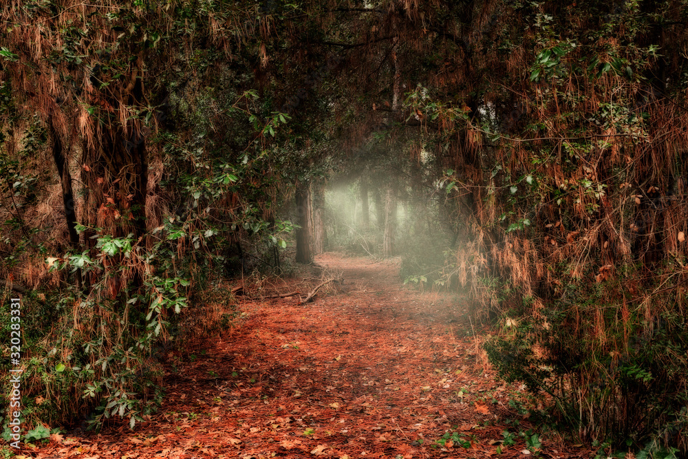 Fototapeta dark passage through the forest with light at the end of the tunnel