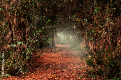 Fotomural dark passage through the forest with light at the end of the tunnel
