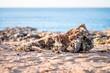 canvas print picture - Rockiges Mallorca