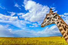 The Sad Giraffe