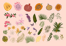 Collection Of Tropical Leaves And Flowers, Fruits, Birds And Butterfly. Editable Vector Illustration.