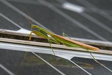 Praying Mantis On Solar Panels...
