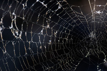 Close Up Shot Of A Spider Web.