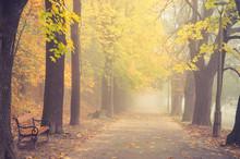 Autumn Foggy Colorful Tree All...