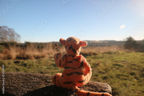 Photo tigger looking out over ash down