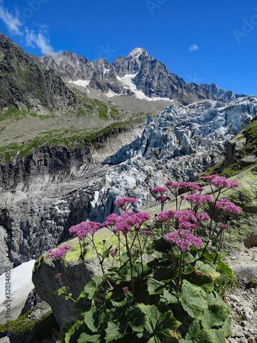 Obraz na plátně Massif du Mont-Blanc, le glacier d'Argentière