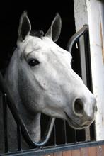 Dappled Grey Lovely Horse Port...