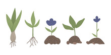 Vector Set Of Sprouted Plants ...