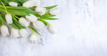 Beautiful White Tulips Flowers...