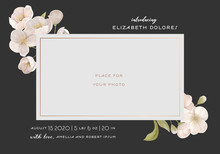 Introducing Baby Card Template With Realistic White Cherry Or Sakura Flowers, Creative Elegant Background, Frame For Photography With Birth Certificate Information Of Newborn Child Vector Illustration