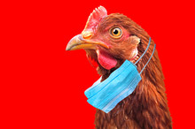 Bird Flu H5N1 In China Concept...