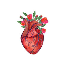 Red Blooming Anatomical Human ...