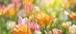 Tulpen in roten und gelben Farben und Mustern