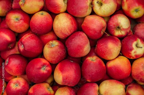 Fototapeta red ripe apples as background