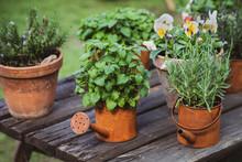Garden Decor, Old Vintage Rust...