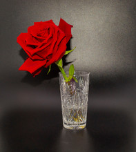 Another View Of Rose In Glass