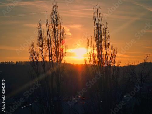 Zachód słońca pomiędzy drzewami - 320425545